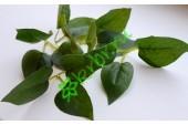Листья Яблони, 3х3 шт.