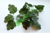 Листья зеленые, 3 пары