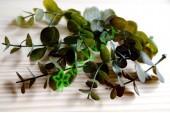 Веточки самшита Верди темно-зеленый, 8 шт