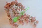 Ампельное растение Мелкоцвет розовый, шт