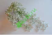 Ампельное растение Мелкоцвет белая патина, шт