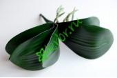 Листья орхидеи Фаленопсис с корнями, шт