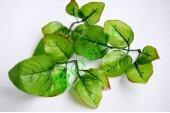 Листья розы Гарден Плюс, 3 шт
