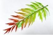 Лист папоротника Блехнум красно-зеленый, шт.