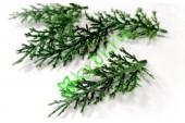 ОПТ - Астильба зеленая декоративная, 50 шт
