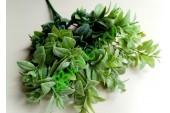 Лавр Эфиопия ветка светло-зеленый, шт