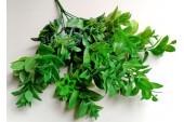 Лавр Эфиопия ветка зеленый, шт