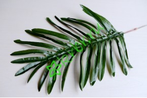 Лист пальмы Робелини, шт