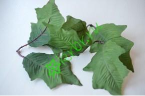 Листья Падуба крупный, 3 пары