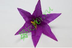 Бутон лилии Танго фиолетовый, шт.