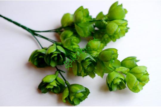 Суккулент Эониум зеленый, шт