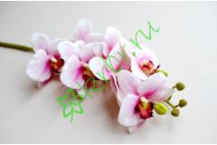 Ветка орхидеи Фаленопсис розовая, шт