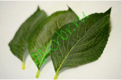 Лист гортензии с напылением крупный, шт