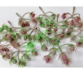 Веточка ягод жимолость бордово-зеленая, шт