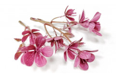 Мелкоцвет Весенний джеральдин, шт