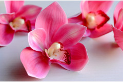 Бутон орхидеи Royal розовый, шт